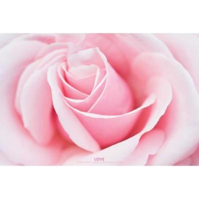 """Постер """"Love (Pink Rose)"""""""