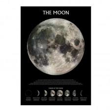 """Постер """"The Moon (Phases)"""" (Уценка) 61 x 91,5 см"""