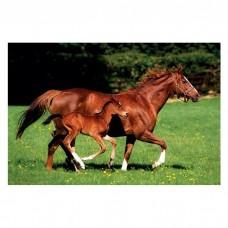 """Постер """"Mare & Foal""""  61 x 91,5 см"""