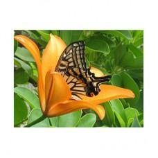 3D открытка Бабочка и Лилия