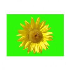 """3D открытка """"Цветок"""""""