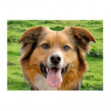 "3D открытка ""Собака"""
